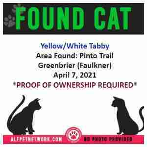 Found Cat in Greenbrier (Faulkner) Yellow/White Tabby