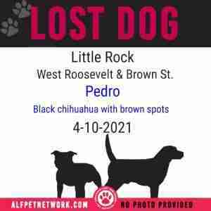 Lost Dog in Little Rock (Pulaski County) Black Chihuahua – Pedro