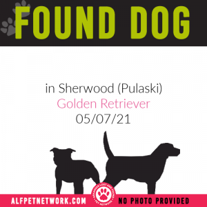 Found Dog in Sherwood (Pulaski County)