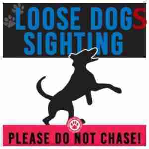 Loose Dogs in Jacksonville (Pulaski)