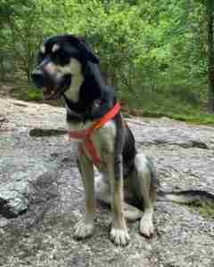 Lost Dog in Hot springs (Garland County)
