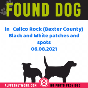 Found Dog in Calico Rock (Baxter County) Black and White patches and spots