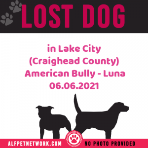 Lost Dog in Lake City (Craighead County)  American Bully short in stature – Luna
